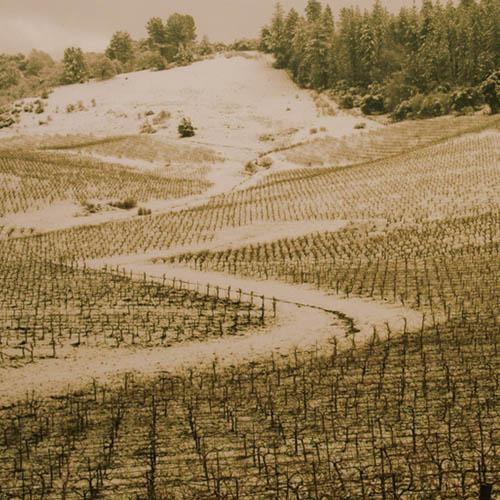 Sobon Wine Family Estate
