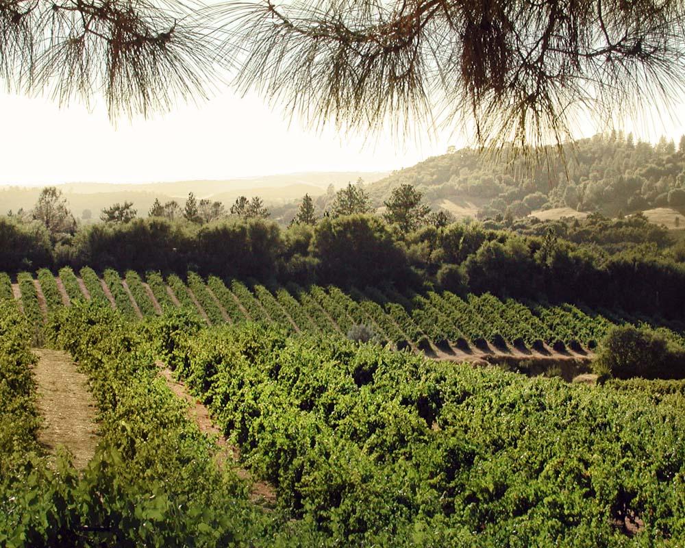 Winemaking / Farming